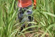 การรับรู้และการปฏิบัติเพื่อป้องกันอันตรายจากการใช้สารกำจัดศัตรูพืชในเกษตรกรกลุ่มเสี่ยง ตำบลหนองบัวบาน